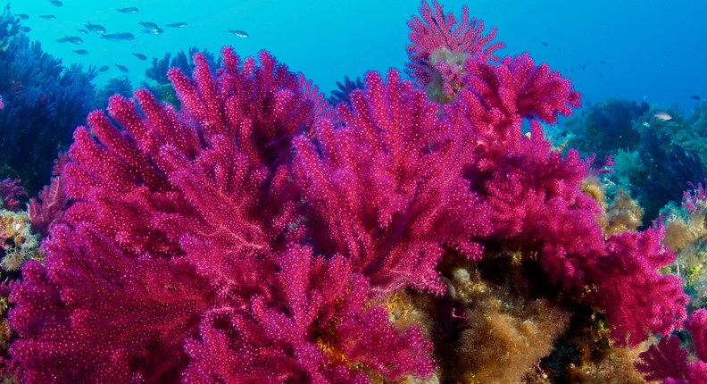 Area Marina Protetta (AMP) Isole Egadi